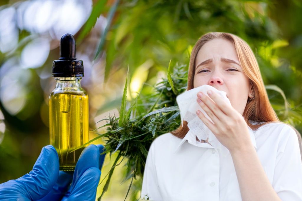 cbd for allergies