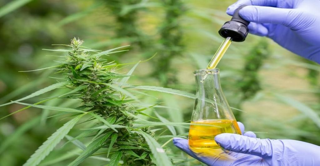 Research on CBD oil for pets