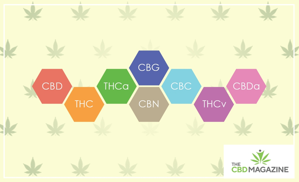 Understand the entourage effect of CBD