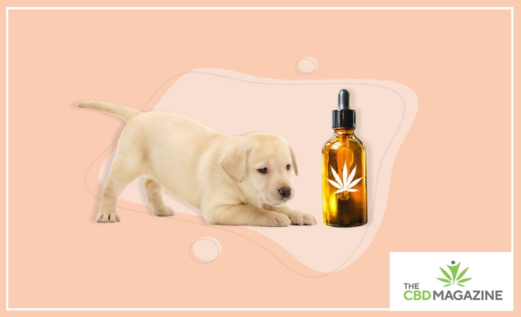 CBD for puppies