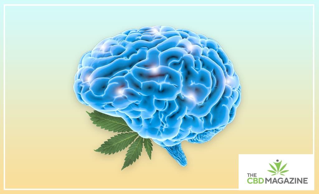cbd reserach in epilepsy