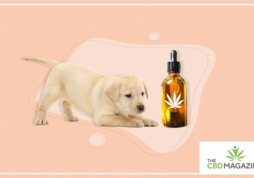 Can you give a puppy CBD Oil